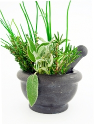 medicinal herbs and their uses pdf